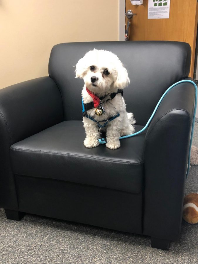Neo is the new therapy dog at Southwest