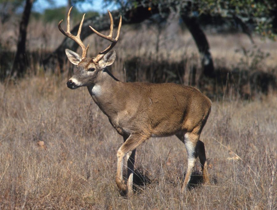 Chronic Waste Disease is making it's way across the United States by way of deer populations.